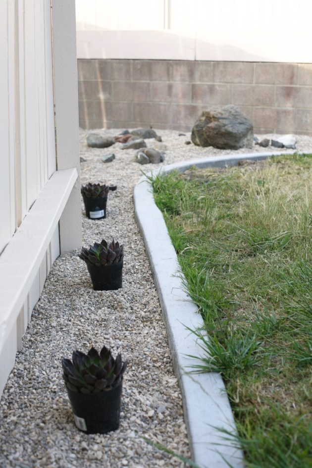 minimalist yard landscaping