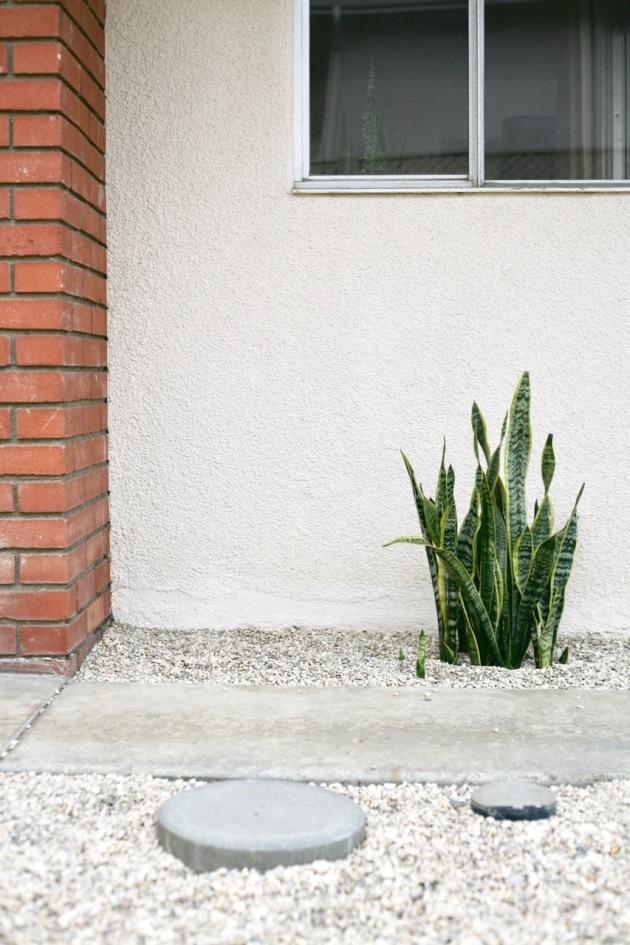 sansevieria snake plant