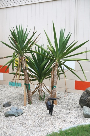 yucca elephantipes tree cuttings propagation